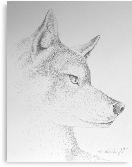 Wolf's Head by sally seabright