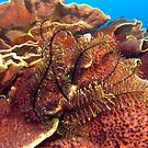 Feather Star by Jamie Kiddle