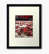 Maple Fields Framed Print