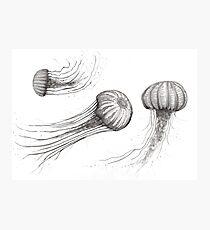 Meeresbewohner Fotodruck