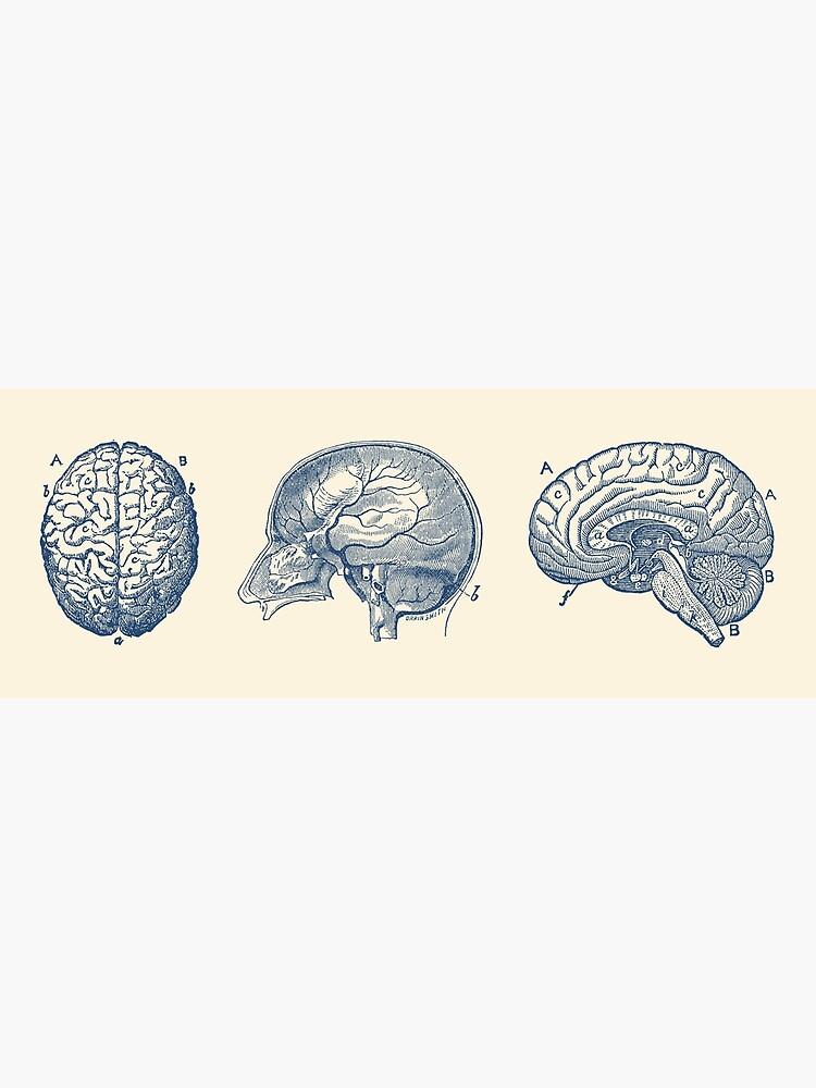 Brain Diagram - Three Views - Vintage Anatomy by VAposters