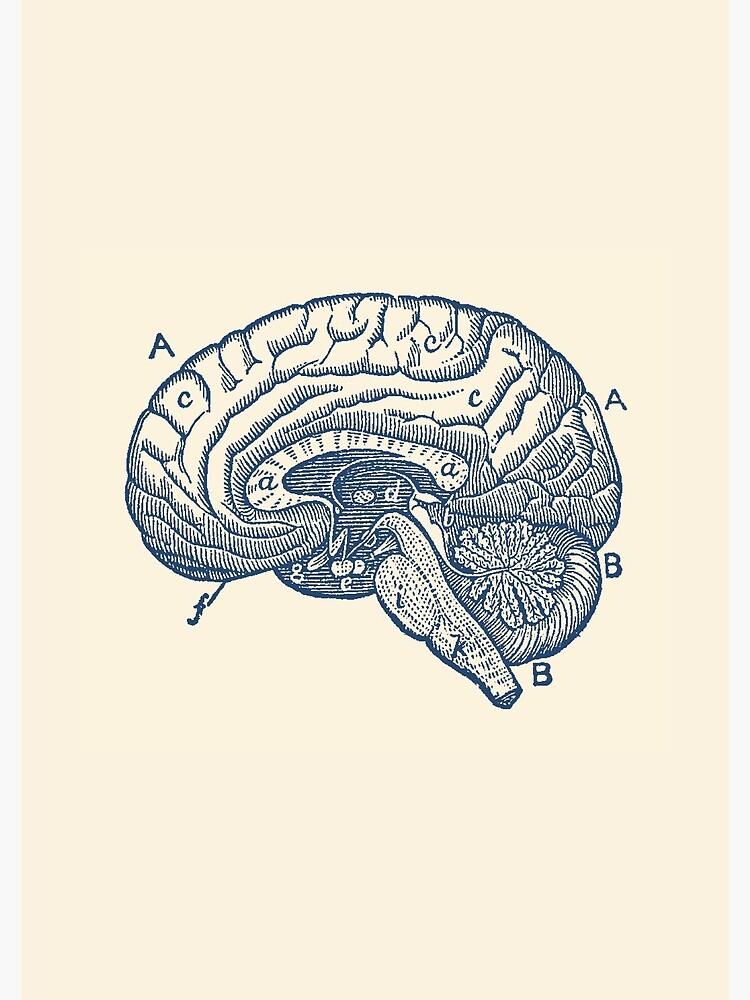 Simple Brain Diagram | Spiral Notebook