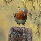 Robin Bird by David Dehner