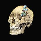 Skull & Dragonfly  by lyndseyart