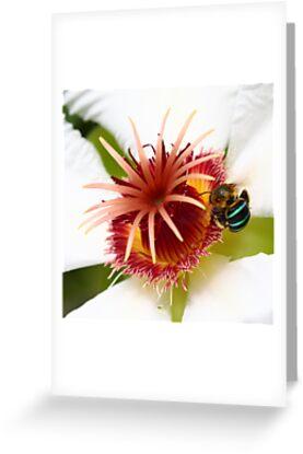 Bumble Bee in Blue by chrispua