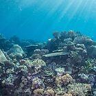 Karumolum Reef by Mark Rosenstein