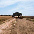 The Single Tree by Rae Tucker