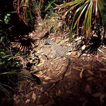 20041227 Lizard, Royal National Park, Australia by muz2142