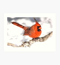 A male Northern Cardinal. Art Print