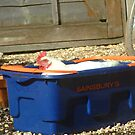chicken in a basket! by tilly