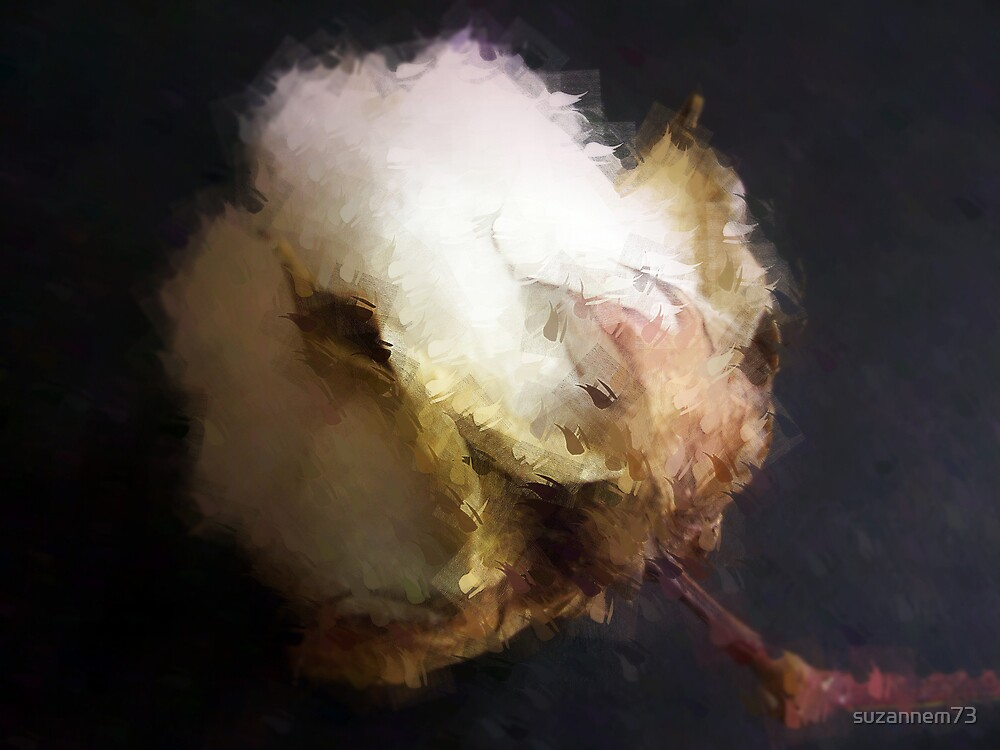 Raw Cotton by suzannem73