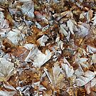 Frosty Autumn Leaves by BaM-Productions