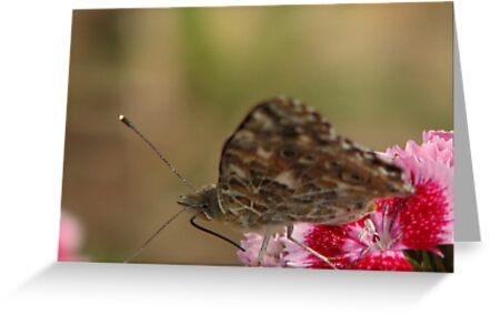mmmmm.....Nectar!! by wahumom