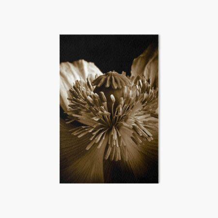 Sepia Poppy Art Board Print