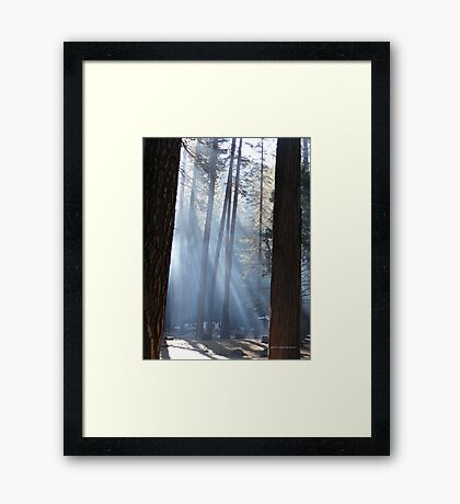 Campers Morning Smoke Through The Pines Framed Print