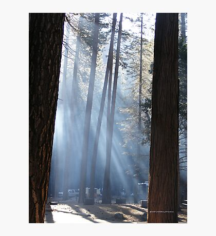 Campers Morning Smoke Through The Pines Photographic Print