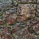 Rock Wall with Moss Abstract by Dana Roper