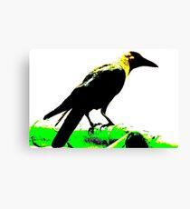 Jackdaw Canvas Print