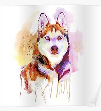 Husky Dog Watercolor Portrait Poster