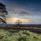 The New Forest by martin bullimore
