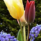 Bouquet of Tulips ~3 by Finbarr Reilly