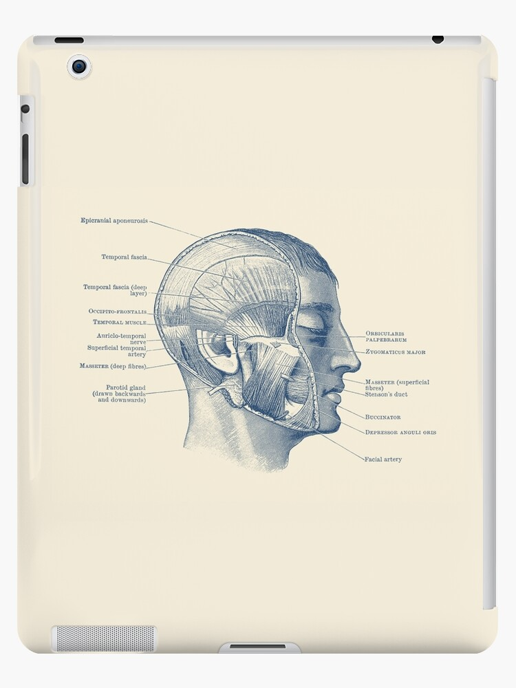 Face Muscular Diagram Vintage Anatomy Ipad Cases Skins By