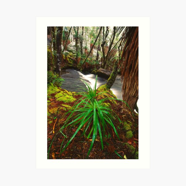Pine Valley in winter, Tasmania Art Print