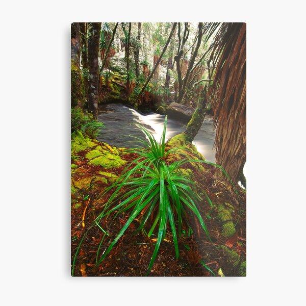 Pine Valley in winter, Tasmania Metal Print