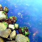 ocean by crossingcolors
