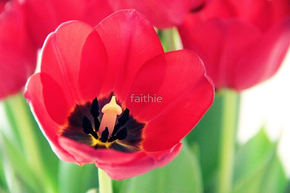 passion red by faithie