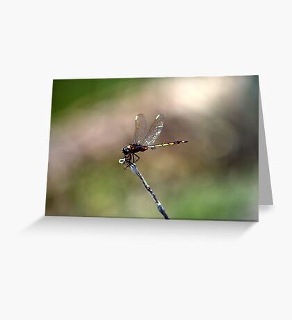 Hang Tight Little One Greeting Card