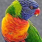 Right Profile - Rainbow Lorrikeet , Sydney Australia by Philip Johnson