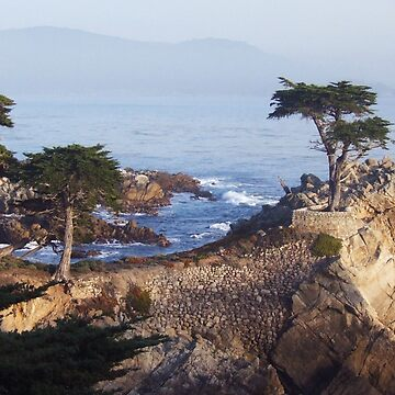 Lone Cypress at sundown by windflowers43