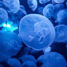 Jellyfish in the deep dark blue water by autumnleaf