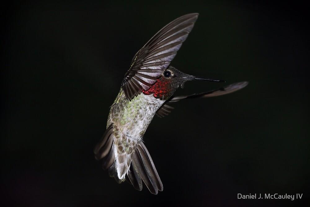 NIght Flight by Daniel J. McCauley IV