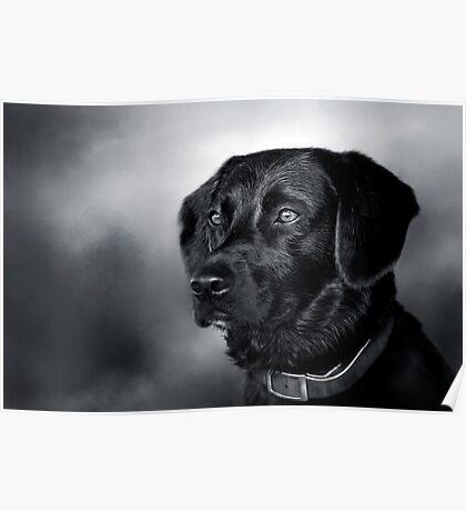 Black Lab Portrait - in Black & White Poster