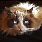 My Cat Cookie by Marija