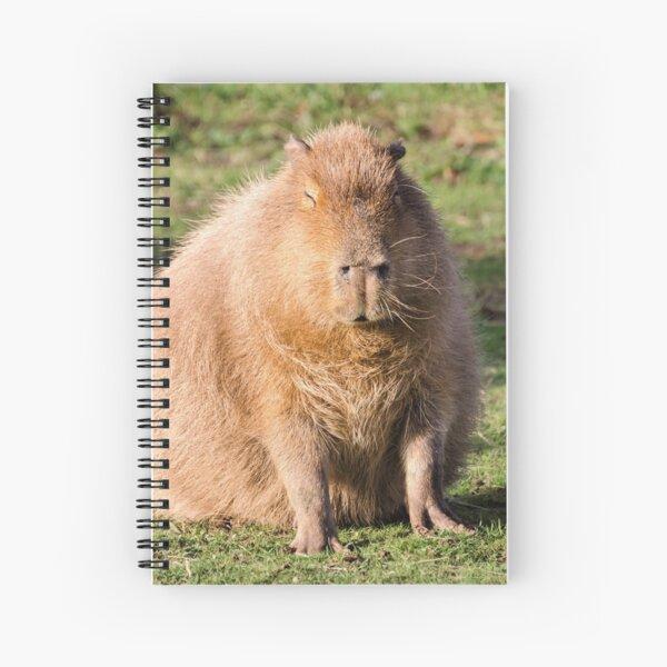 Capybara stare Spiral Notebook
