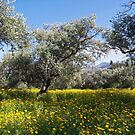The Old Olive Grove at Ozankoy by Alex Cassels