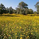 Cyprus Wildflower Meadow by Alex Cassels