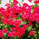 Les pluies d'avril apportent les fleurs de mai by faithie