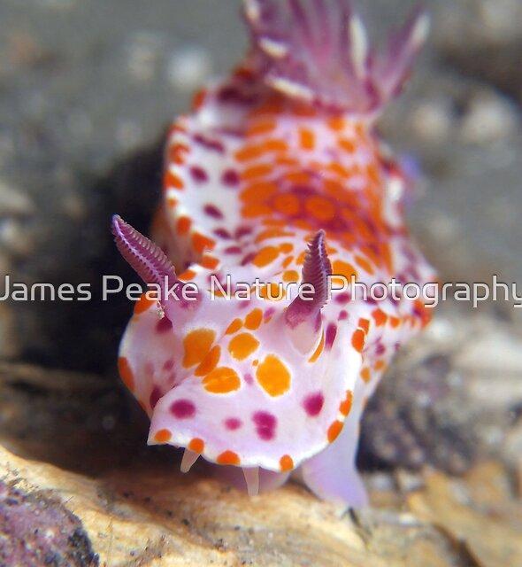 Sweet Ceratosoma. by James Peake Nature Photography.