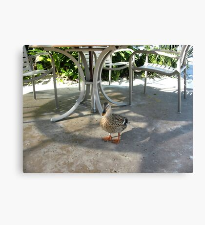 Lost Duck Canvas Print