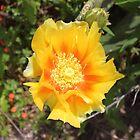 Cactus virág by zumi