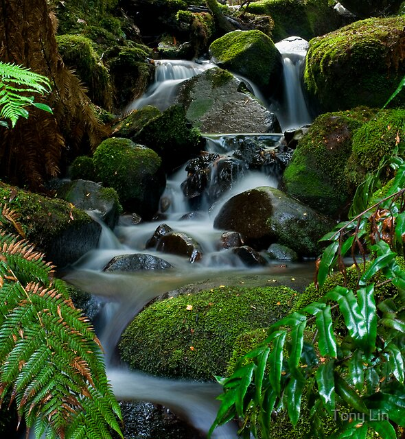 Cement Creek Yarra Ranges by Tony Lin