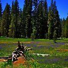 Summit Meadow by Nancy Richard
