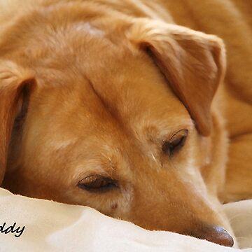 Buddy by JudyGayle