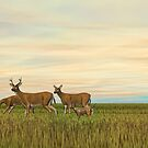 Kansas Deer  by Walter Colvin