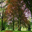 My favourite walk.......... by Martina Fagan