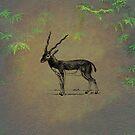 Antelope by David Dehner